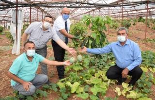 Geleneksel ürünlerde maliyet artınca çiftçiler...