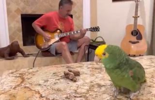 Gitar Çalan İnsan Dostuna Eşlik Eden Kuşu İzlerken...