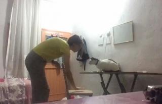 Görme Engelli Kedisine Çıktığı Masadan İnmeyi...