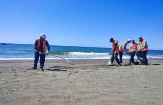Hatay sahilinde petrol atıklarını temizleme çalışmaları...
