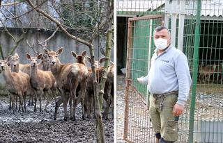 Hayvanat Bahçesindeki Geyiği Kaçırıp Yemişlerdi:...