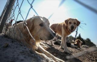 Hayvanları Koruma Kanun Teklifi TBMM'ye Geliyor:...