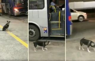 Her Gün Aynı Saatte Aynı Yerden Otobüse Binerek...