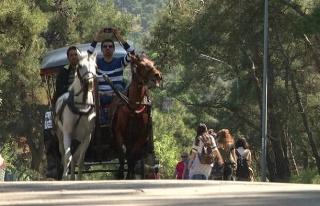 İBB, Adalar'daki Fayton ve Atları Satın Alıyor:...