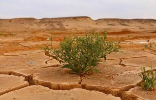 IPCC uyardı: 'İklim değişikliğini sınırlandırmak...