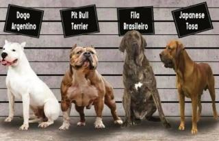 Irk köpek besleyenlere kısırlaştırma ve kayıt...