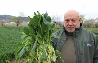 Ispanaklarını Satamayan Çiftçi: 'Benim Ispanağımı...