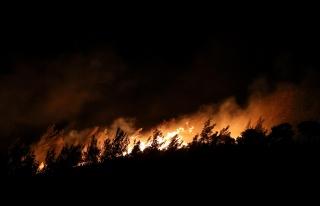 İzmir'deki Orman Yangının Nedeni Belli Oldu