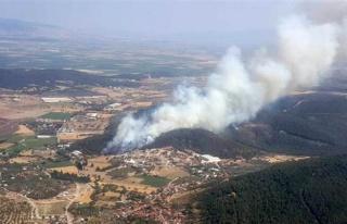 İzmir Foça'da Orman Yangını! Ters Rüzgar Nedeniyle...
