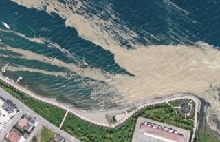 İzmit Körfezi'nde deniz salyası istilası artarak...