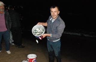 Karadeniz'de Görülmemiş Olay: Kıyıya Vuran Balıkları...