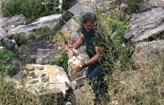 Kars Çayı'nda mahsur kalan yavru köpeği gazeteciler...