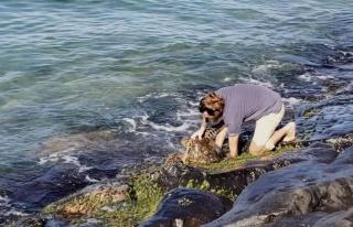 Kayaların Arasında Sıkışan Deniz Kaplumbağasını...