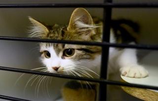 Kedilere sokağa çıkma yasağı geldi