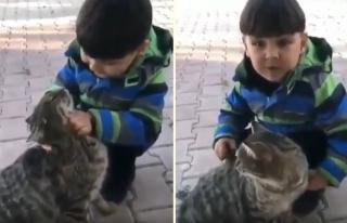 Kediyi Sevmelere Doyamayan Ufaklık: 'Ben de Büyüyünce...
