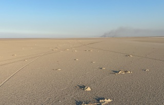 Konya Valiliğinden Tuz Gölü'ndeki flamingo ölümlerine...