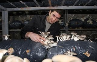 Mantar üretimine hobi olarak başladı, ayda 2 ton...