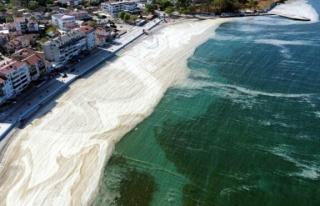 'Marmara Denizi'nde yüzmek cilt hastalıklarına...