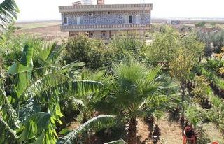 Mezopotamya ovasında Akdeniz iklimi meyveleri yetişmeye...