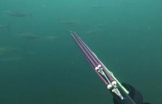 Müsilaj etkisini kaybedince, balıklar sürüler...