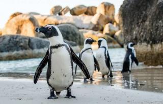 Netflix penguenlerine arı şoku!