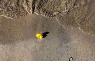 Plastik ördeklerin
