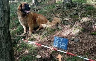 Sahibi tarafından gezintiye çıkarılan köpek,...
