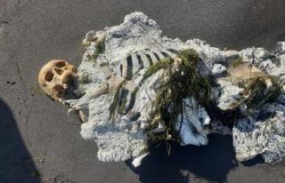 Sahilde Yürüyüş Yapanlar Buldu: Samsun'da Kıyıya...