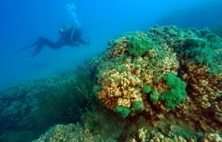 Salda Gölü'nün ekosistemi bilimsel çalışmalar...