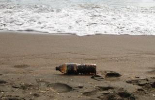 Samandağ sahiline vuran petrol atıkları canlıları...