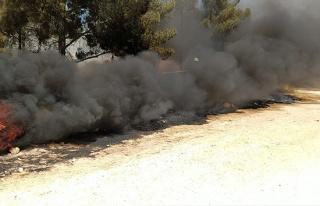 Şanlıurfa'da orman yangını büyümeden kontrol...