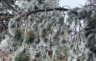 Sarıkamış buz kesti, ağaçlar kırağı tuttu
