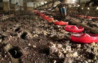 Sel felaketinin vurduğu bölgede 8 bin 800 civciv...