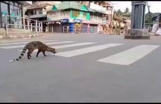 Sokağa Çıkma Yasağı İlan Edilen Hindistan Sokaklarında...