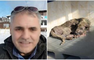 Sokak Köpeklerini Öldürüp Belediyenin Önüne...