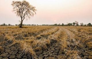 TARSİM'den üreticilere 214 milyon TL kuraklık...