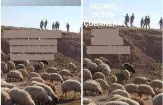 TBMM'de 'Gözaltına Alınan Koyunlar' Tartışması:...