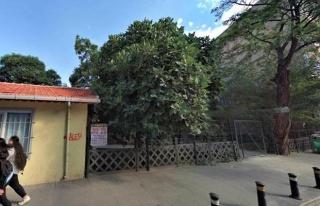 TCDD'den Arazi Kiralanmış: Pendik'te Son Yeşil...