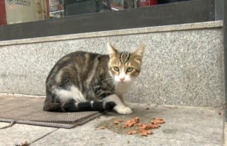 The 'beggar cat' is forcing shoppers to buy cat food