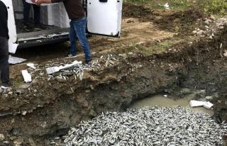 Türkeli'de yasal boyutun altındaki 5 ton balığa...