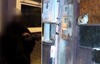 Tuzla'da Kan Donduran Olay! Yavru Kediyi Kesip Yemeye...