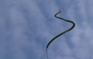 Uçan yılanların sırrı çözülüyor