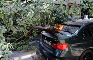 Ünlü oyuncunun aracının üzerine ağaç devrildi