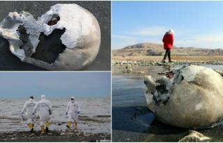 Van Gölü'nde Sular Çekilince Kemik ve Kafatasları...