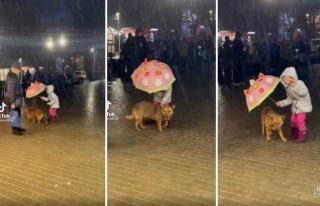 Yağmurda Islanan Köpeği Şemsiyesi ile Korumaya...
