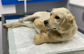'Yaşaması Bir Mucize': Patileri Kesilen Yavru Köpek...