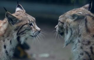 Yeni normalleşmeyle birlikte Bursa Hayvanat Bahçesi...