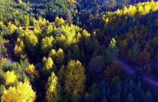 Yozgat'ta sonbahar güzelliği drone ile görüntülendi