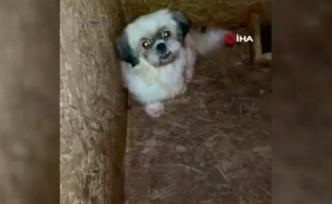 Ses Telleri Alındı İddiası: Ankara'da Bir Bodrum Katında 68 Köpek Bulundu