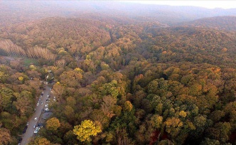 Valilik Duyurdu: İstanbul'da 31 Ağustos'a Kadar Ormanlık Alanlara Girmek Yasaklandı